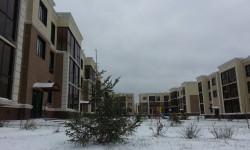 В столице появились первые новогодние елки
