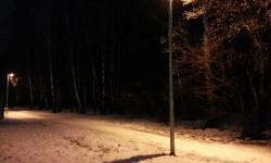 ночная тропинка в лесу